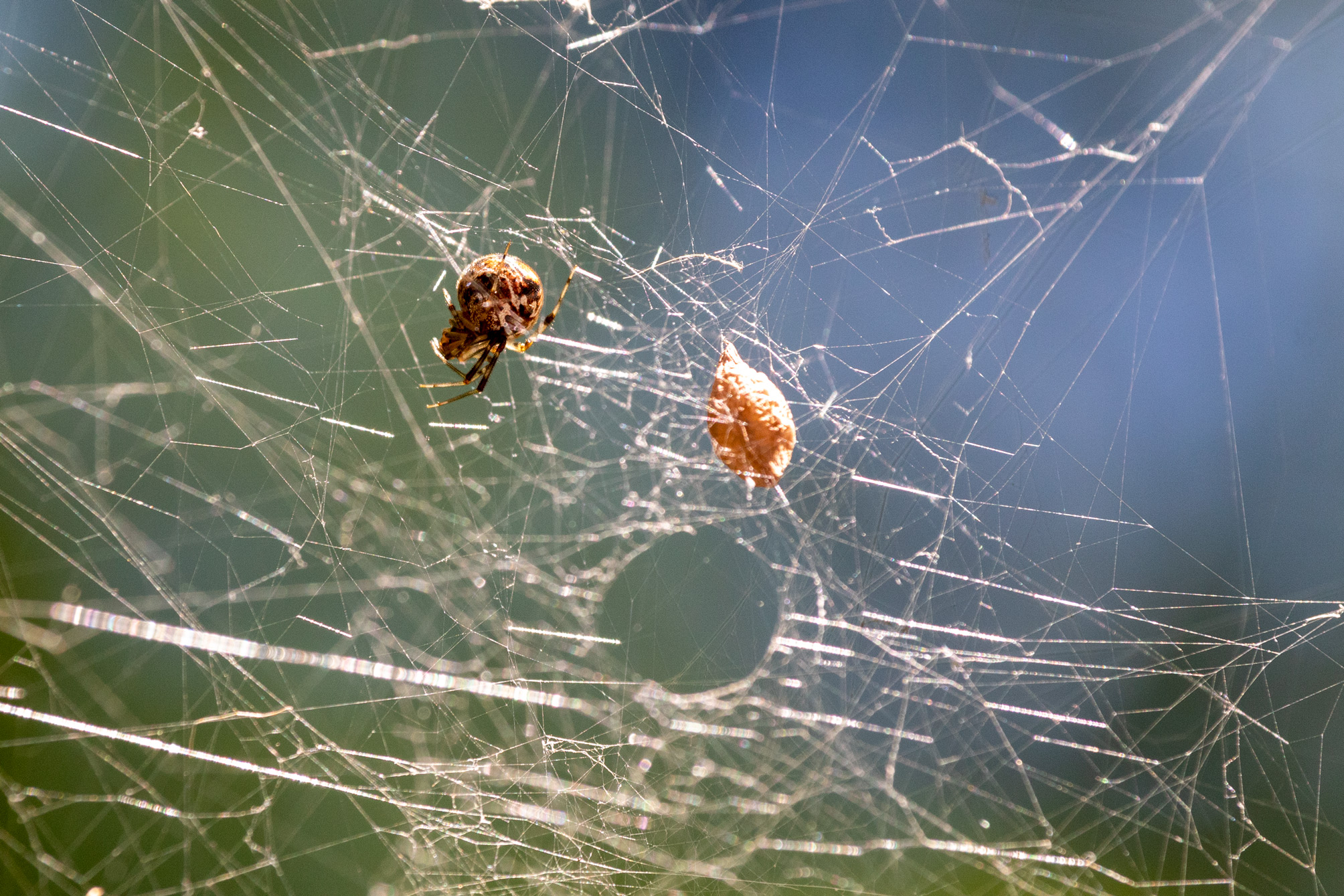 Round spider in a web with a round hole in it