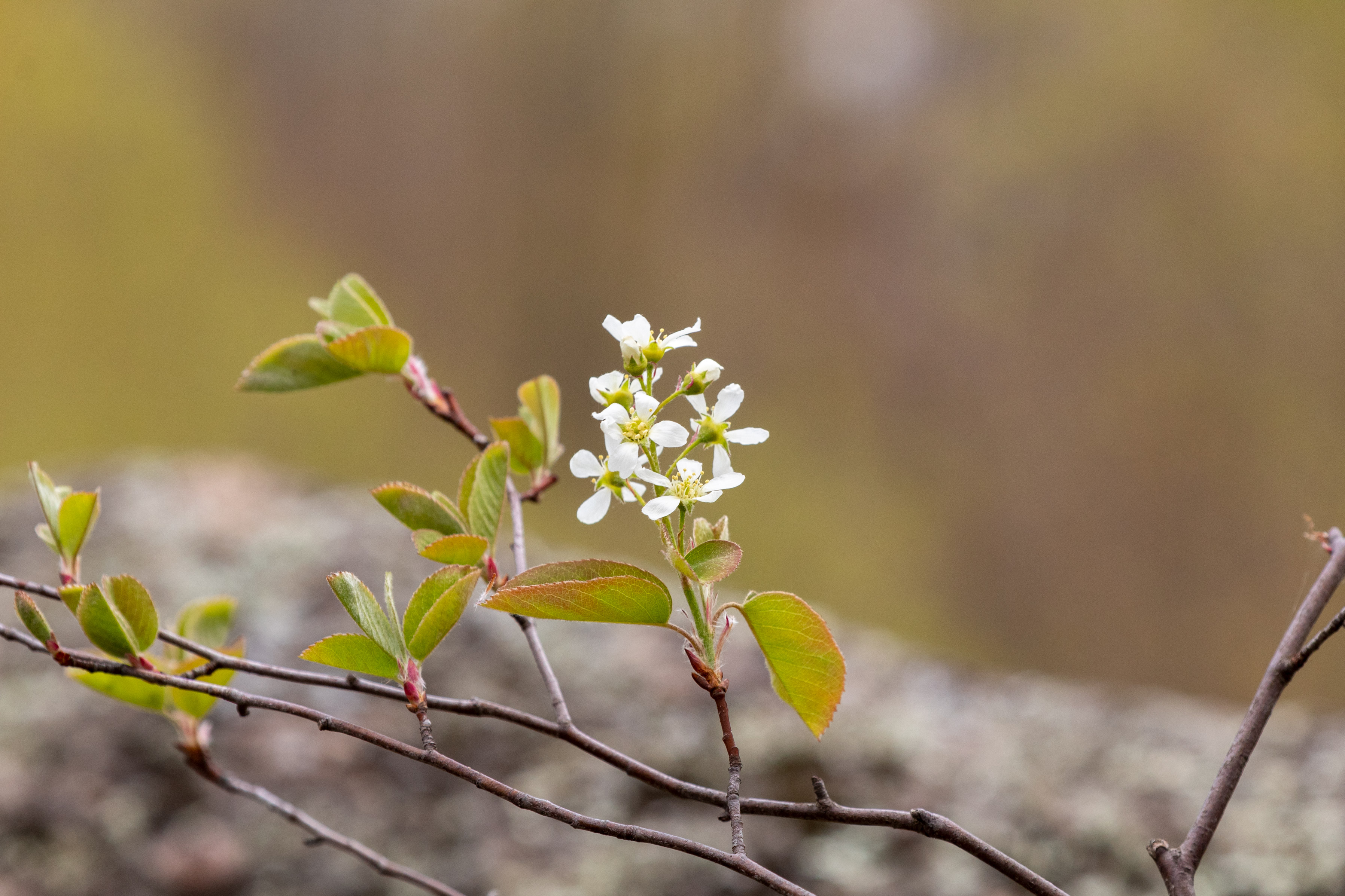 Small white flowers blossoming on a branch