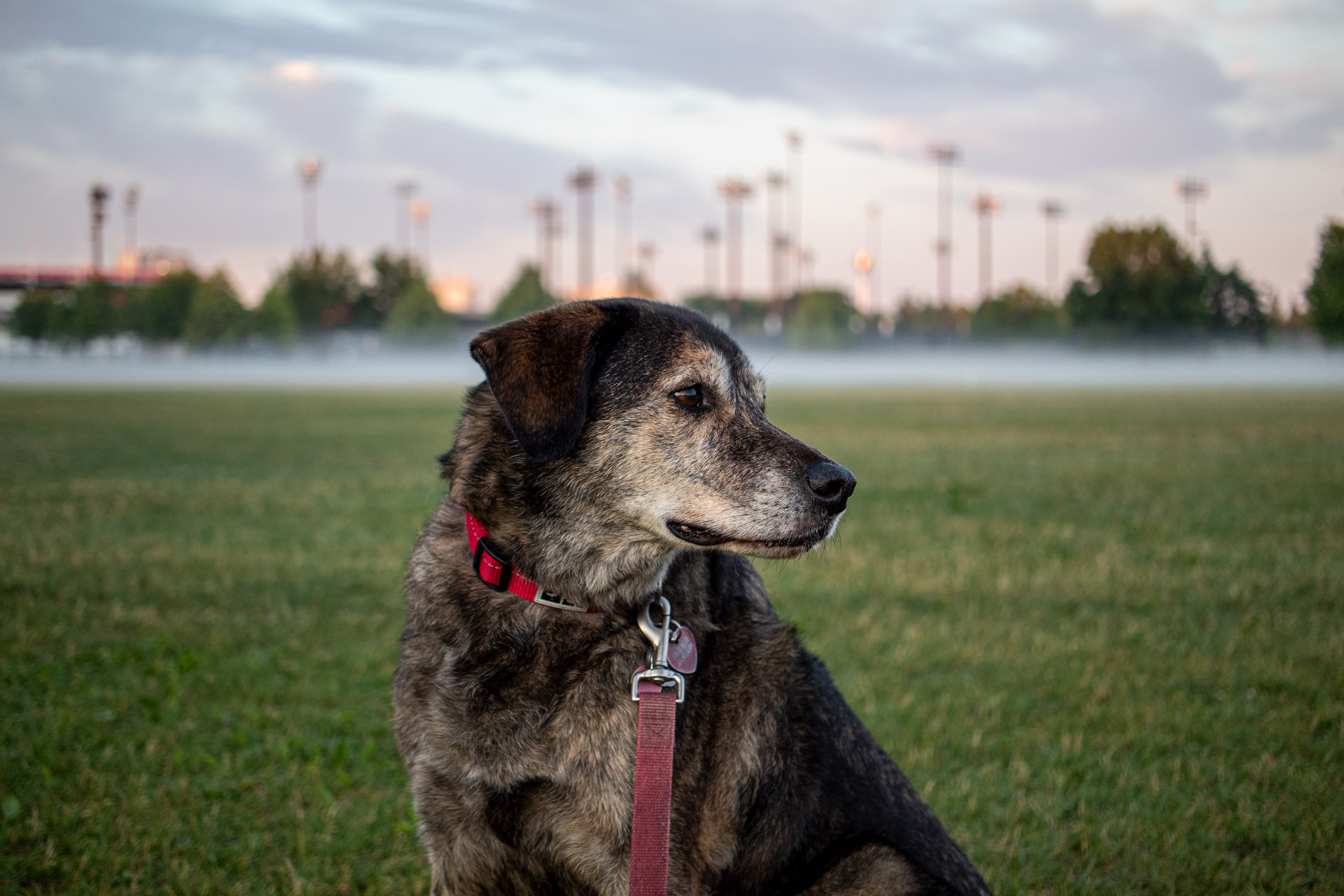 Dog with a red leash and collar in front of a fog-covered field
