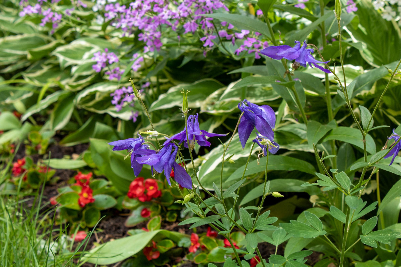 Blue, red, and purplish flowers